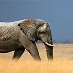 Elephant Sanctuary Experience in Victoria Falls, Zimbabwe